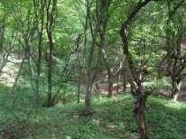 forestthree